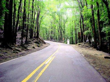 Bilar_Forest